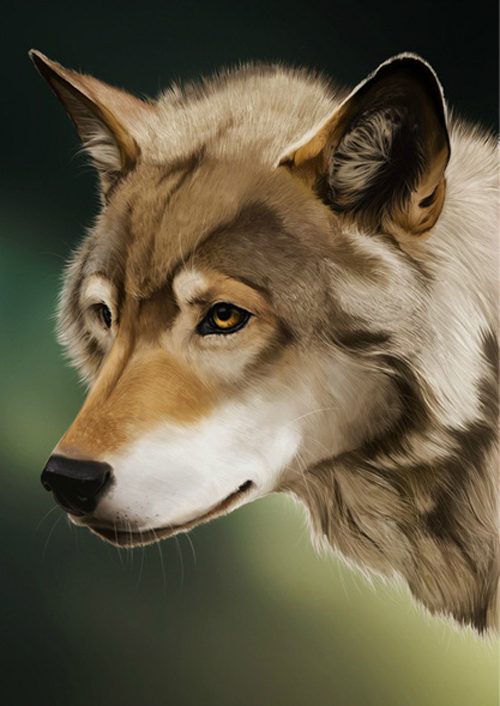 How To Paint A Wolf In Adobe Photoshop Tutorials Press