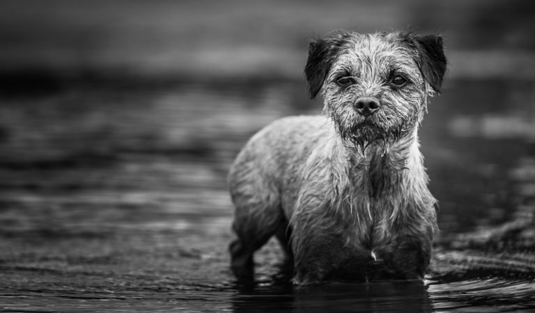 12 Brilliant Animal Photography Tutorials